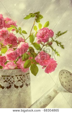 Pink summer roses in vintage watering can