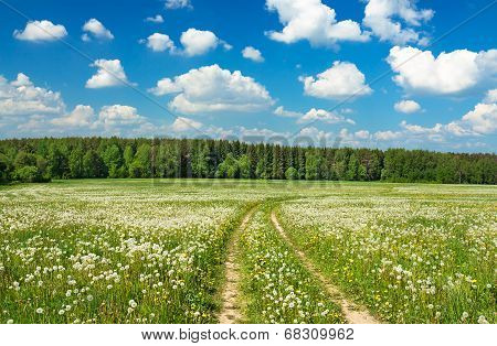 Summer  Landscape With A Blossoming Meadow, The Road And The Blue Sky
