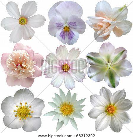 Set Of White Spring  Flowers