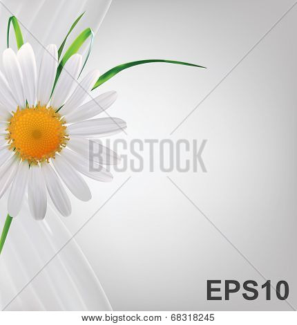 Abstract background with daisy
