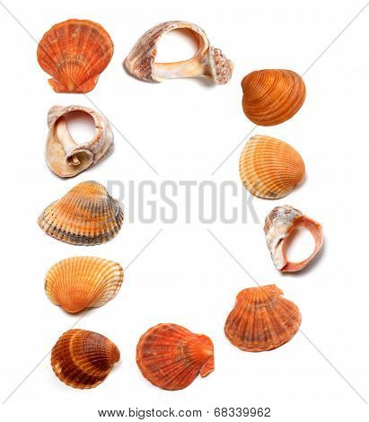 Letter D Composed Of Seashells
