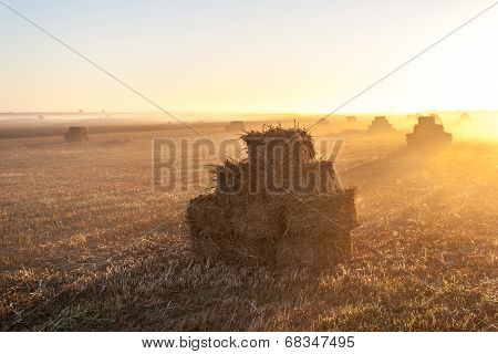 Haystacks on the field at dawn