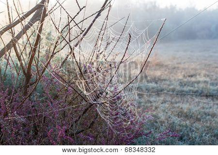 Autumn cobwebs on bushes