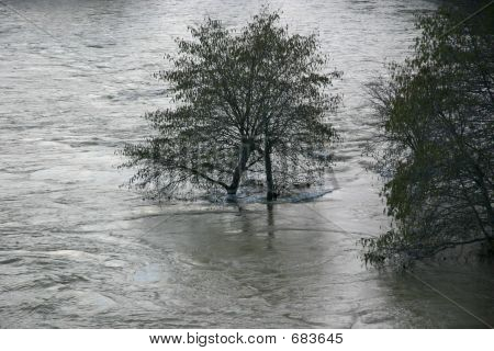 American River In Flood 1
