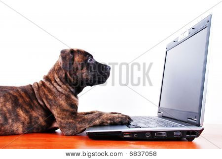 Dog And Notebook