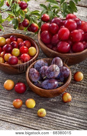 sloes and plums