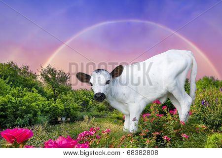 Baby Longhorn Calf Framed By A Rainbow