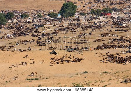 Pushkar Camel Mela ( Pushkar Camel Fair ) Rajasthan, India.