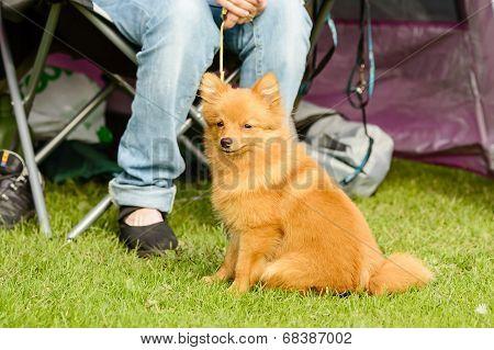 Cute Furry Dog
