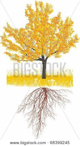 Cherry tree in autumn with roots
