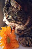 Постер, плакат: Табби с оранжевый цветок