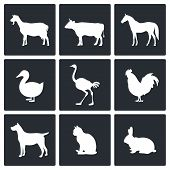 foto of fowl  - Pets icon set on a black background - JPG