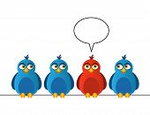 pic of bluebird  - Four birds sitting on wires - JPG