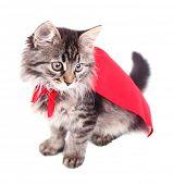 stock photo of cloak  - Cat in red cloak - JPG
