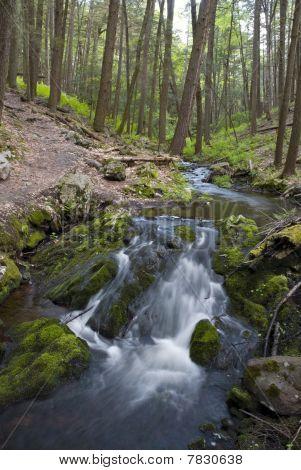 Downstream Forest