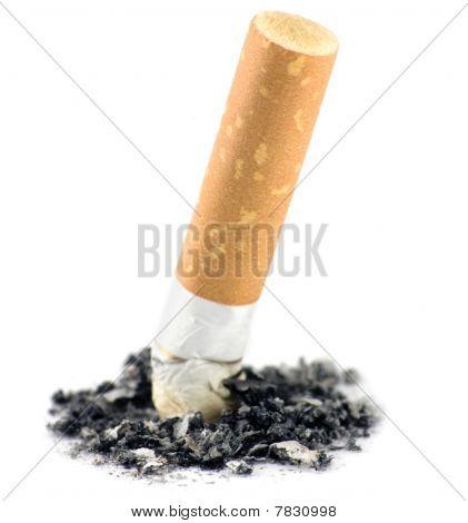 Cigarette Butt Macro