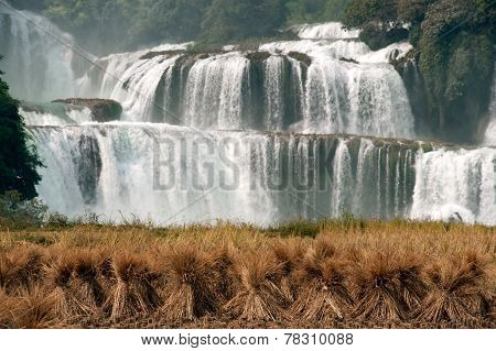 Straw In Rice Field Front Of Datian Waterfall In China.