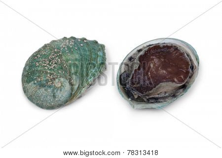 Front and back of a fresh raw abalone in the shell on white background