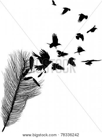 illustration with crows flying from feather silhouette isolated on white background