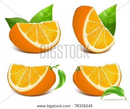 Fresh ripe oranges with green leaves. Vector illustration.