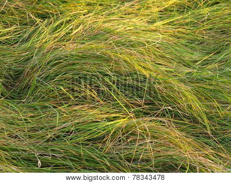 long grass in a winter meadow background