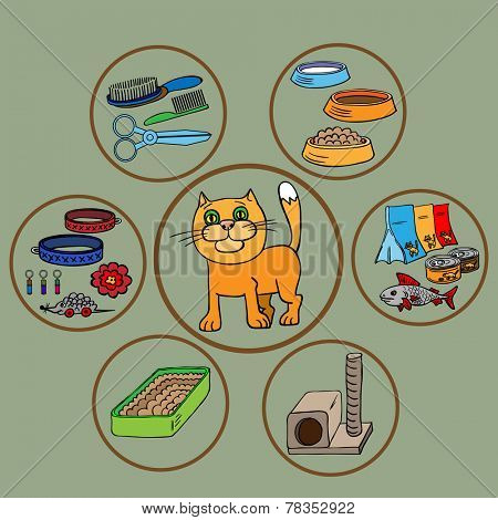 Infographics. Domestic cats and all that is necessary for the maintenance and care.