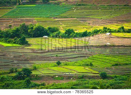 High view of rice terraces Mae Mae Chaem, Chiang Mai, Northern Thailand.