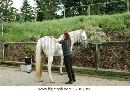 A Woman Caring For A Horse.