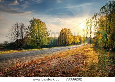 Road and autumn