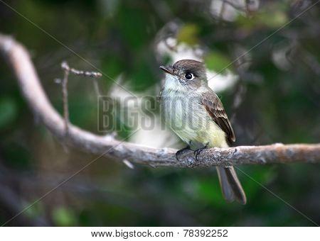 Bird squad passerines.
