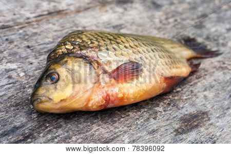 Raw Freshwater Fish Carp On A Wooden Board