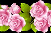 image of english rose  - Seamless background with rose roses - JPG