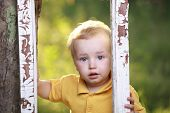 picture of crying boy  - Little boy crying  in garden - JPG