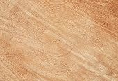 image of cross-section  - Cross section detail of sawed log background - JPG