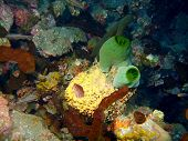 pic of squirting  - The surprising underwater world of the Bali basin - JPG