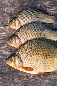 image of freshwater fish  - Raw freshwater fish carp on a wooden board - JPG