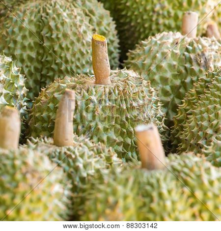 Durian fruits on the market