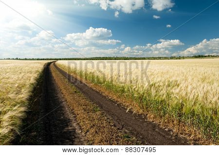 ground road in wheaten field. summer landscape