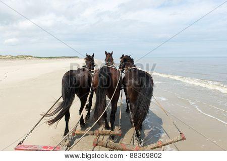 Horses pulling tilt car at the beach from Dutch Terschelling