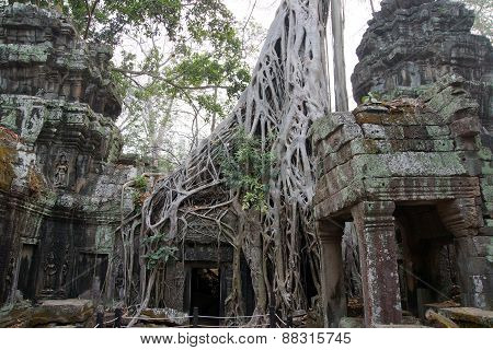 Huge Tree Roots Engulf The Ruined Temple