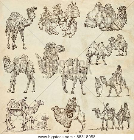 Camels - An Hand Drawn Pack. Originals