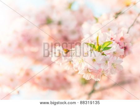 Spring blossoms in macro detail