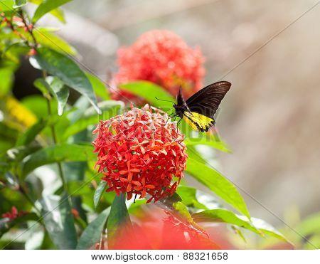 Butterfly in butterfly park