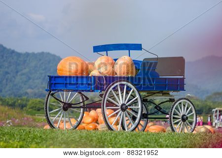 Blue Wagon Full Of Pumpkins In Farm