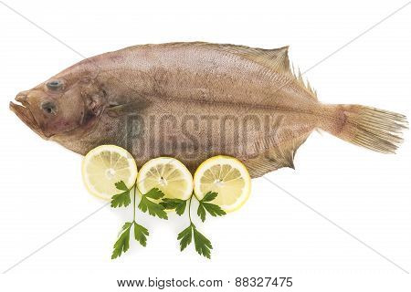 Flounder isolated on white