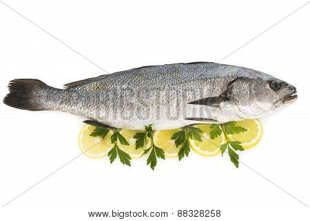 Sea bass isolated on white