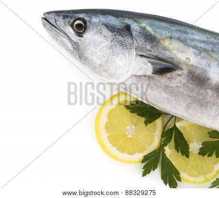 Bonito fish isolated on white