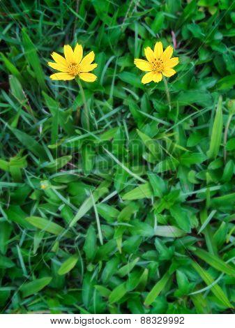 Yellow Fresh Flower On Spring Green Grass