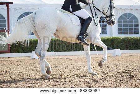 Dressage Horses