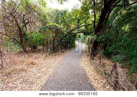Pathway In A Park Victoria Falls, Zimbabwe In Spring